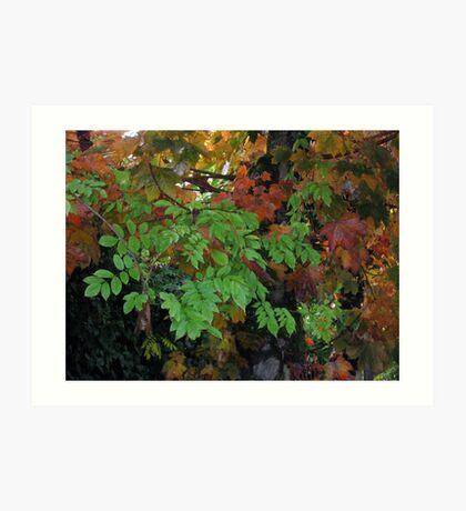 Autumn Layers Art Print
