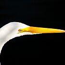 Great Egret Portrait. Merrit Island N.W.R. by chris kusik