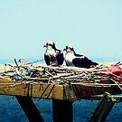 Osprey Nest Decor by Sharon Woerner
