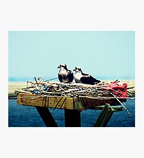 Osprey Nest Decor Photographic Print