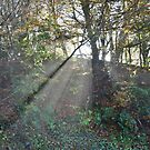Exmoor: Sunlight through the Trees by Robert parsons