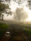 Misty laneway ... by Rosalie Dale