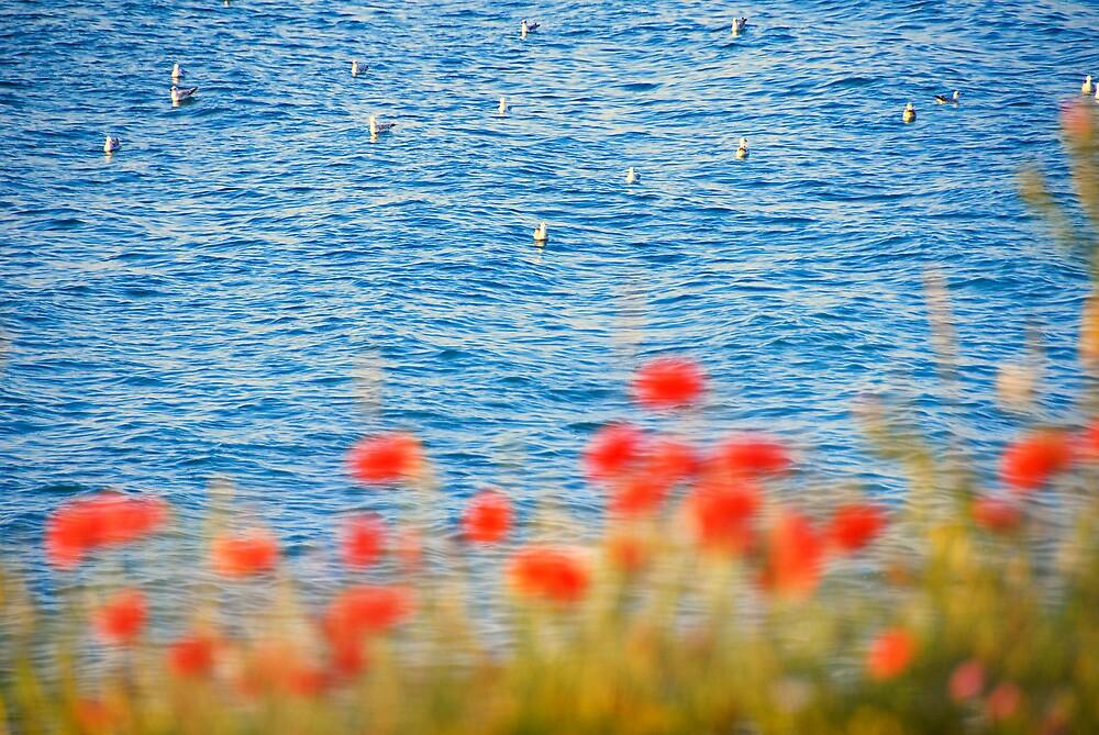 Seagulls' Heaven by Paula Belle Flores