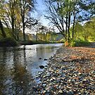 Exmoor: Autumn on the River Barle by Robert parsons