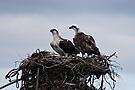 Mum and Dad preparing to welcome their next generation by Ian Berry