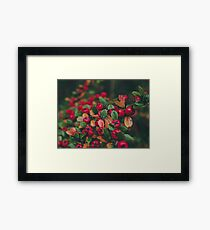 Tiny Winter Berries Framed Print
