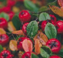 Tiny Winter Berries Sticker