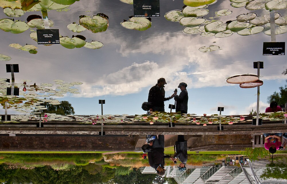 Lilly Ponds at Kew Gardens by Heather Buckley