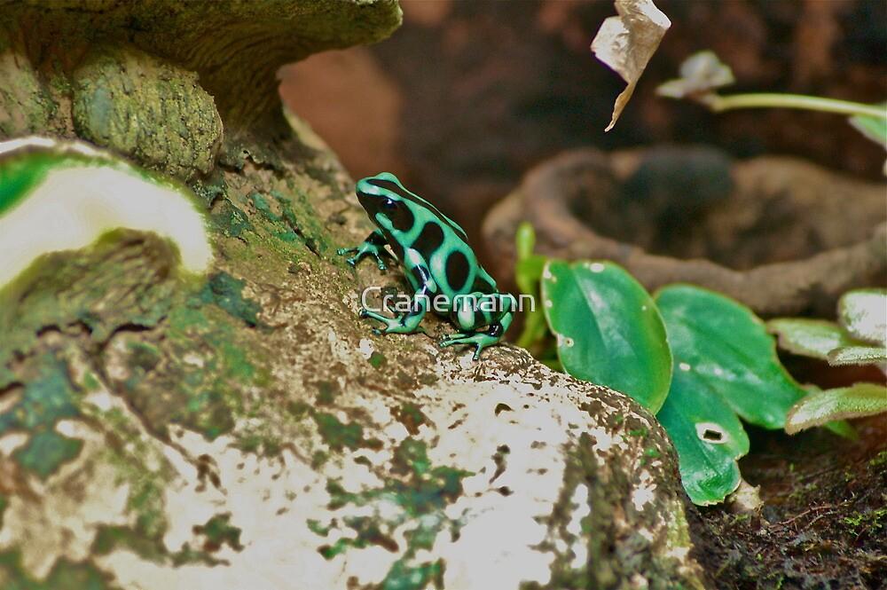 frog green by Cranemann