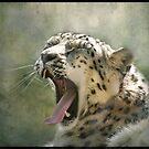 Yawn...! by polly470