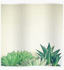 Succulent Forest Poster
