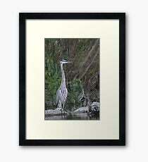 Great Blue Heron on the Milwaukee River Framed Print