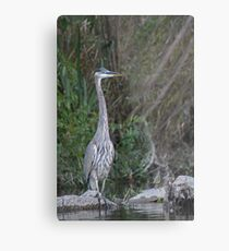 Great Blue Heron on the Milwaukee River Metal Print