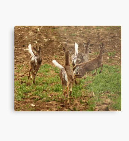 Four Whitetails at Holy Hill Metal Print