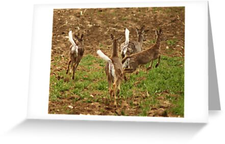 Four Whitetails at Holy Hill by Thomas Murphy
