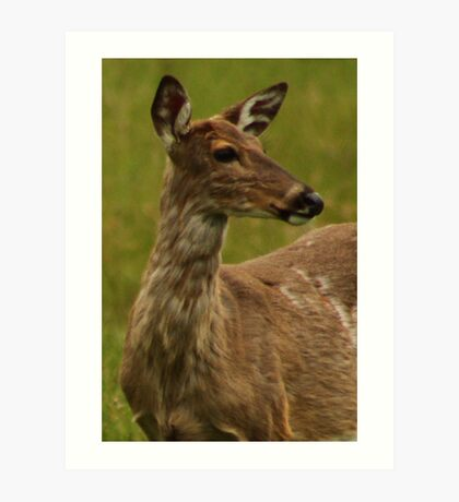 Deer Bust Portrait Art Print