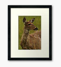 Deer Bust Portrait Framed Print
