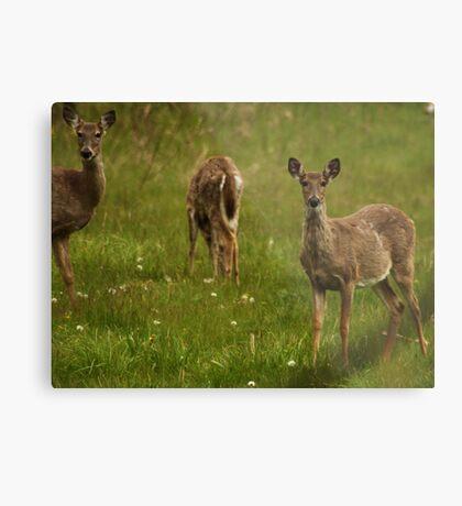 Three Deer Metal Print