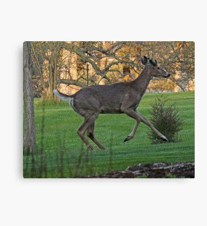 Running White-Tailed Buck Canvas Print