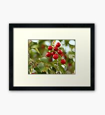 Cherries on the Cherry Tree Framed Print