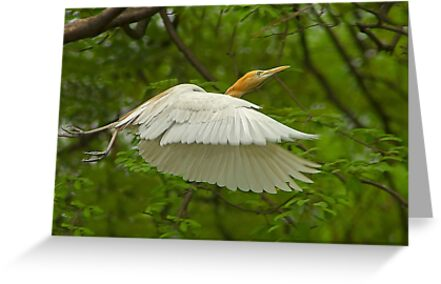 A day with Egrets #1 by Prasad
