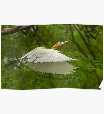A day with Egrets #1 Poster
