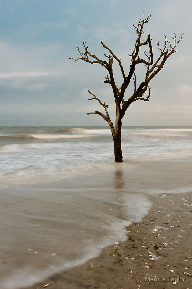 Slowly Washed to Sea by Marcus Taylor