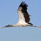 Symmetry of a birds in flight profile by Anthony Goldman