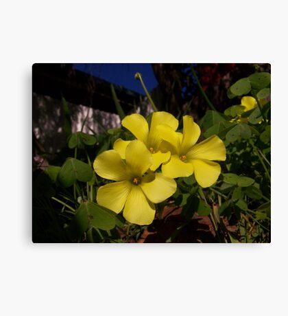 Splash of yellow Canvas Print