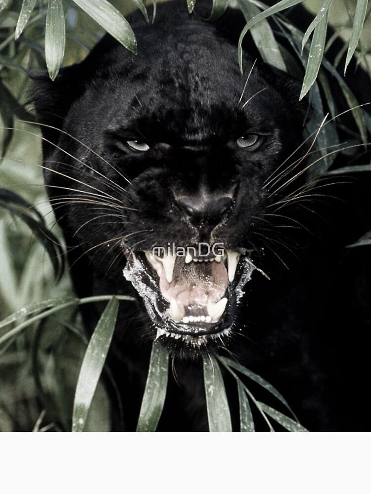 Panther by milanDG