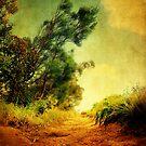 Bush Walks by mark thompson