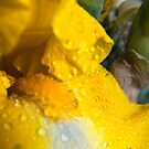 Color Me Yellow by GMcDermott