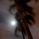 Palm Trees in Moonlight by BrianDawson