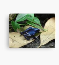 """Blue Dart Frog""  by Carter L. Shepard Canvas Print"