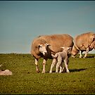 It's Lambing Time ... by Barb Leopold