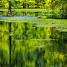 Reflections on a Cypress Pond by Janice Carter