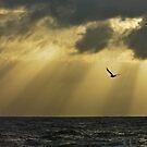 Hope by Anton Gorlin