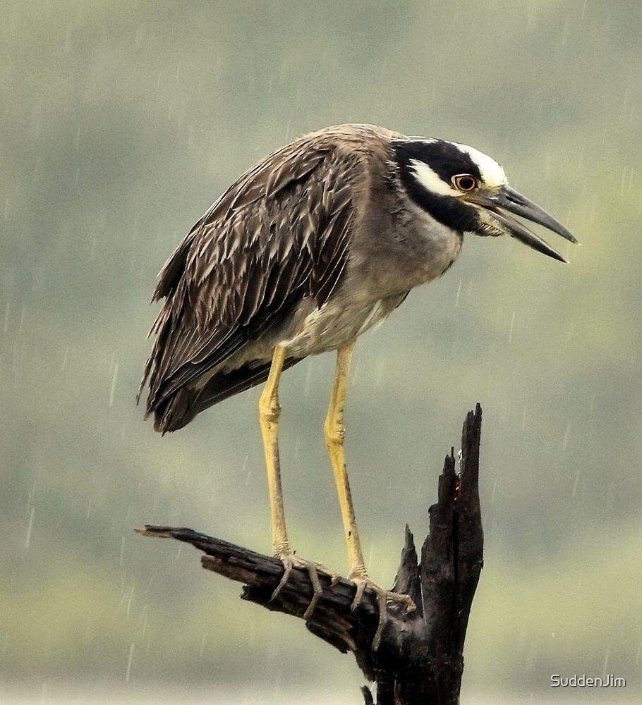 Heron In The Rain by SuddenJim