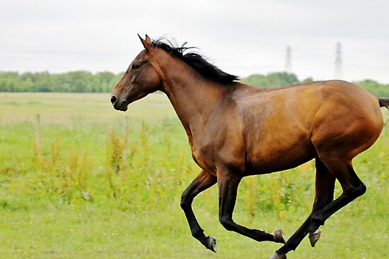 Running Free by Ladymoose