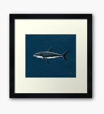 Carcharodon carcharias by Amber Marine Framed Print