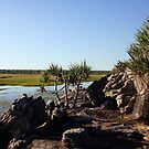 A creekside scene in Arnhem Land by georgieboy98