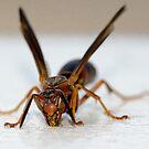 Wasp lick! by vasu