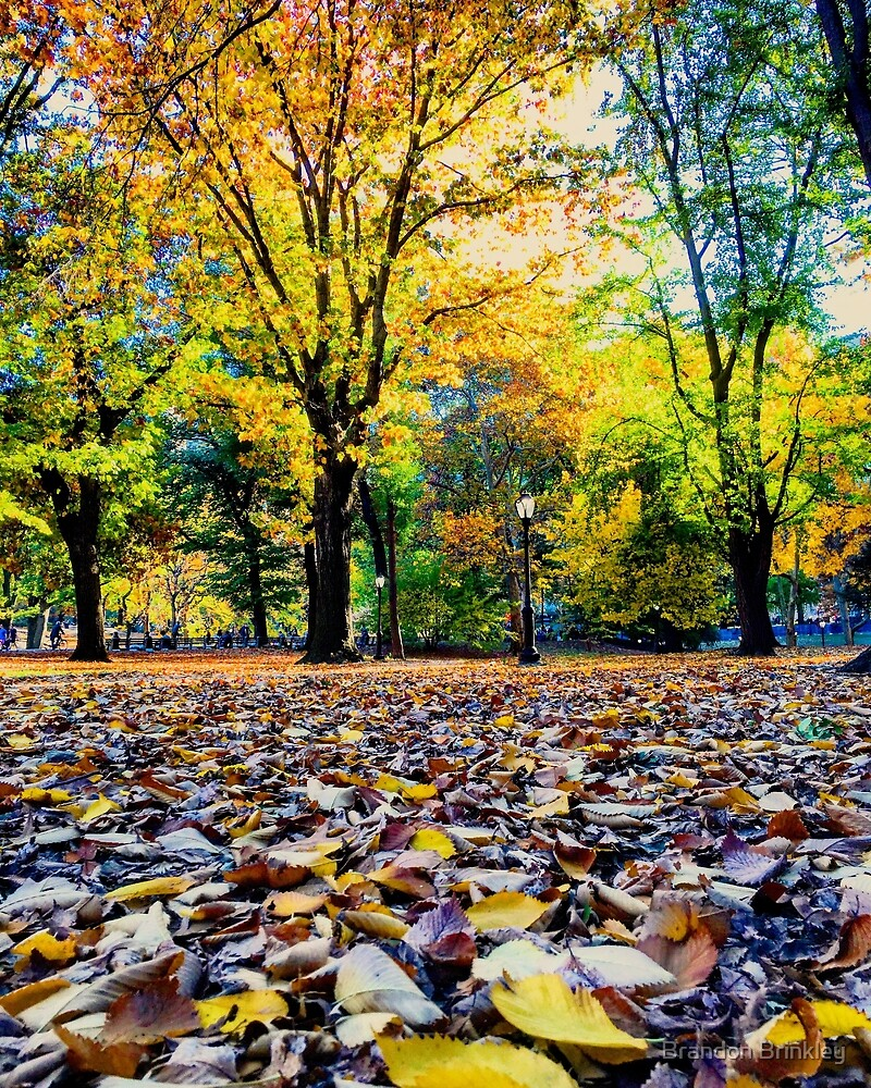 Blanket of Leaves by BrandonBrinkley