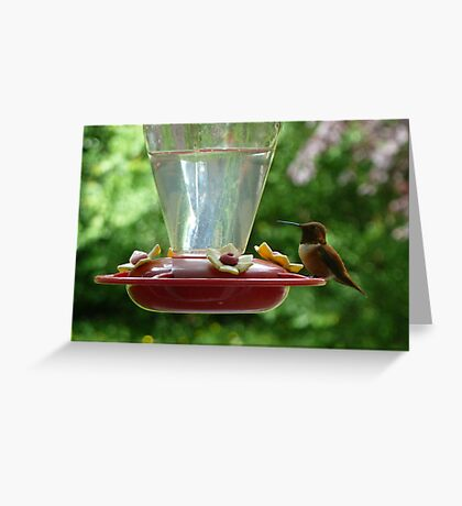 Mr Hummingbird stops by for a drink Greeting Card