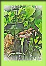 Sparrow Breaks From The Heat by Terri Chandler
