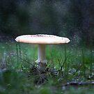 Mushroom Magik by Becca7