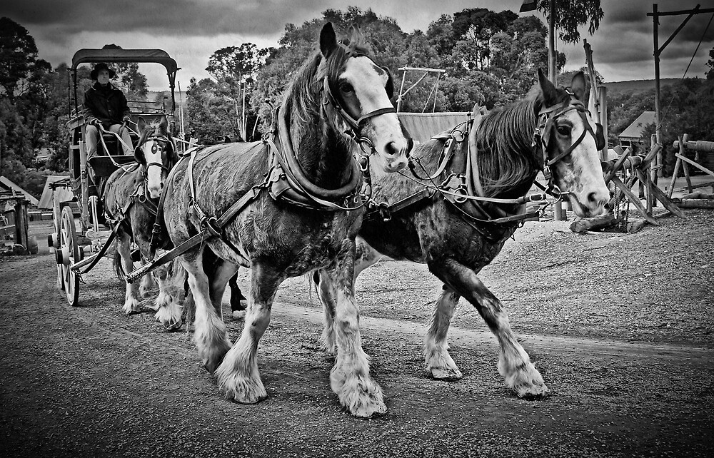 Walk On - Up The Hill  - Black & White by TonyCrehan