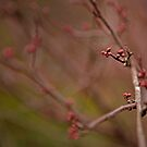 Winters buds by Becca7