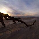 Driftwood - Ocean Beach West Coast Tasmania by Ben Rae