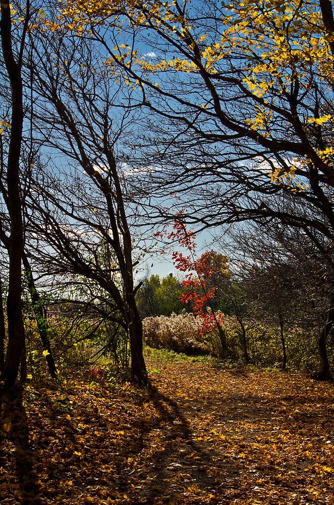 Eramosa Karst Hamilton by Bill  Watson